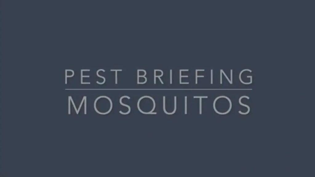 Pest Briefing - Mosquitos