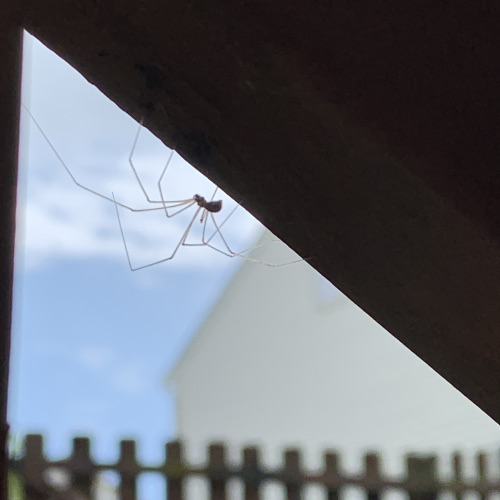 Spider climbing 500px