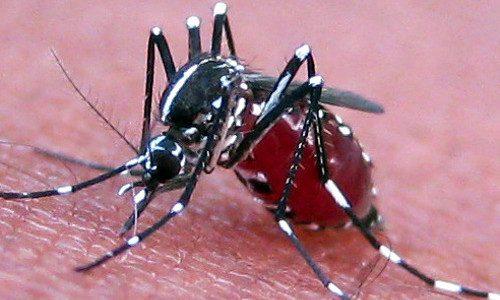 Mosquito Pest Control 500x300px