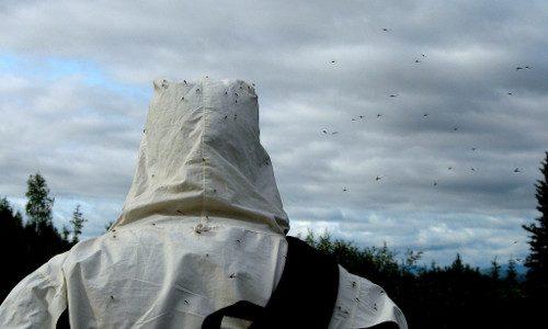 Mosquitoes swarm around pest control exterminator