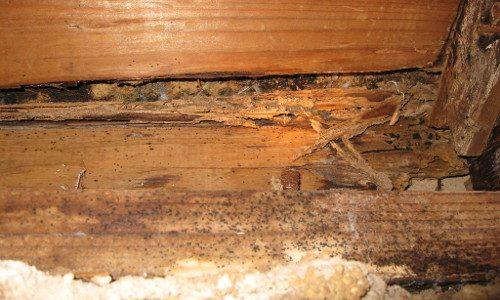 termite damage 500x300px